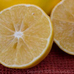 Meyer Lemons sliced in half